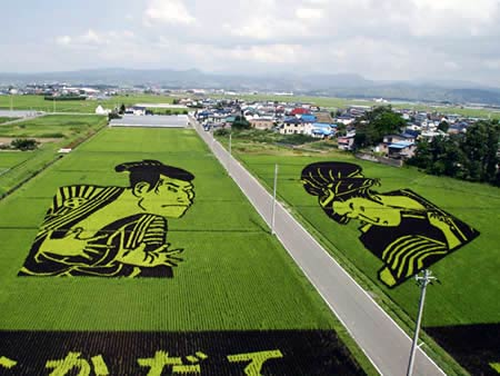 arte arroz