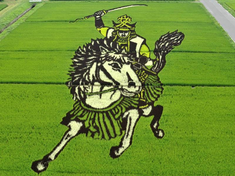 arroz artistico