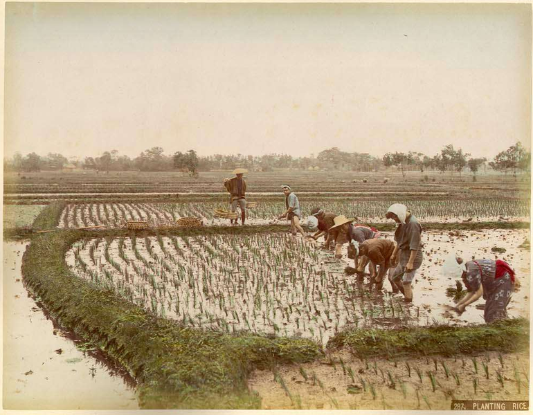 770px-Kusakabe_Kimbei_-_287_Planting_Rice
